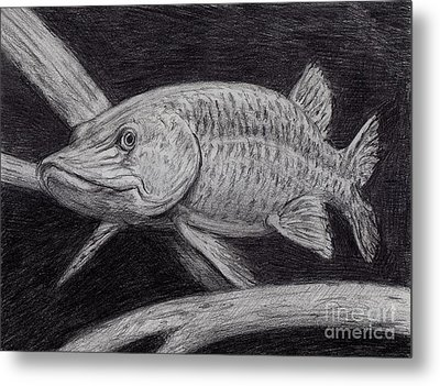 Esox Masquinongy Metal Print by Larry Green