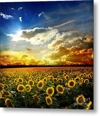 Field With Sunflowers Metal Print by Boon Mee