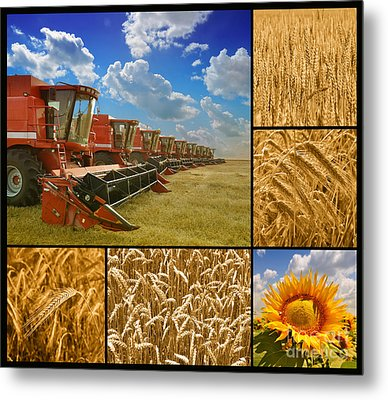 Fields And Grain Collage Metal Print by Boon Mee