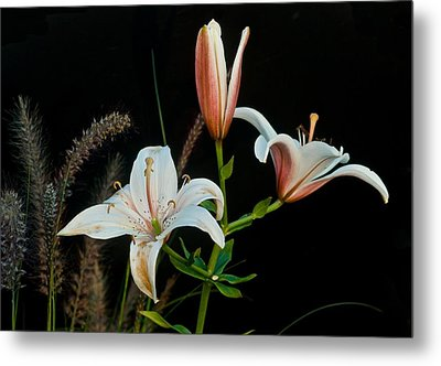 Floral Arrangement Metal Print by Dan Ferrin
