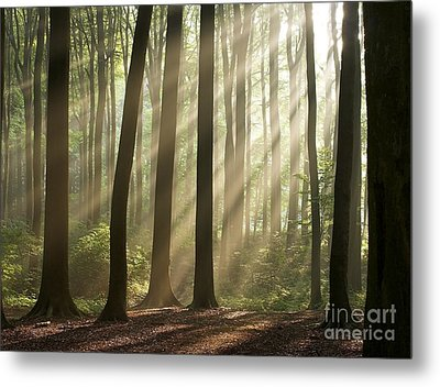 Forest Metal Print by Boon Mee