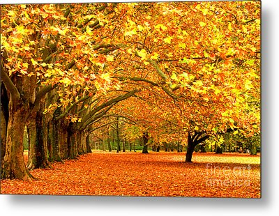 Golden Forest Metal Print by Boon Mee