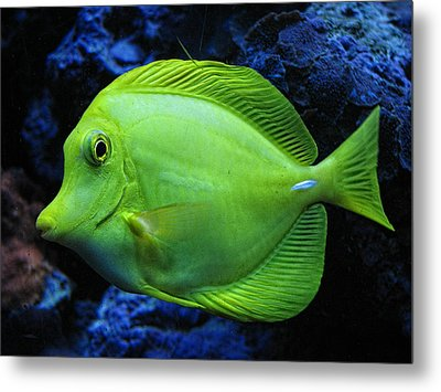 Green Fish Metal Print by Wendy J St Christopher