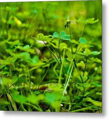 Green Morning  Metal Print by Andrew Raby