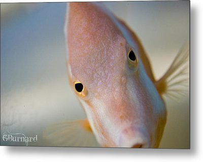 Hai There Metal Print by Guinapora Graphics