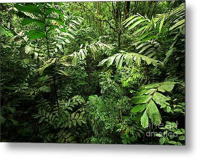 Heart Of The Rain Forest - Costa Rica Metal Print by Matt Tilghman