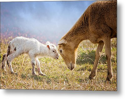 Hello I'm Your Mother Metal Print by Bonnie Barry
