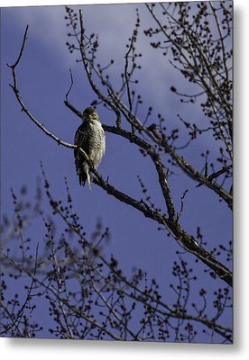 Here's Looking At You Metal Print by Thomas Young