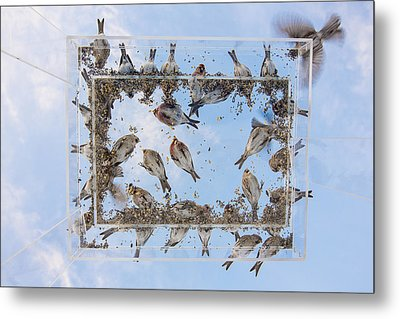 Hungry Little Birds Metal Print by Tim Grams