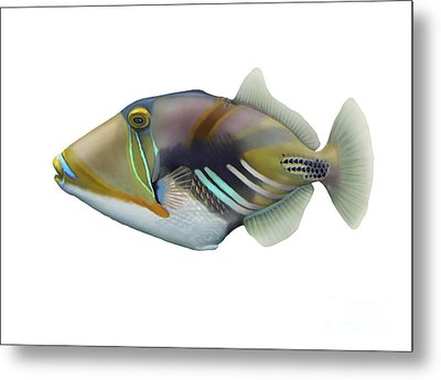 Illustration Of A Picasso Triggerfish Metal Print by Carlyn Iverson