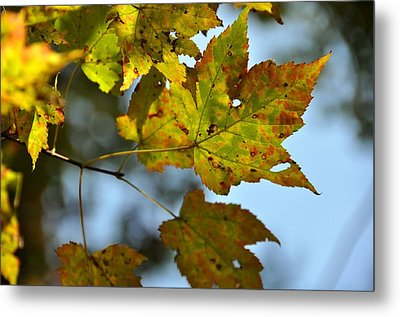 Ilovefall Metal Print by JAMART Photography