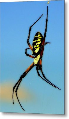 Itsy Bitsy Spider Metal Print by Karen Wiles