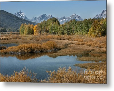 Kiss Of Fall In The Grand Tetons Metal Print by Sandra Bronstein