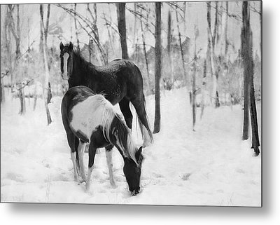 Looking For A Bite Metal Print by Kathy Jennings