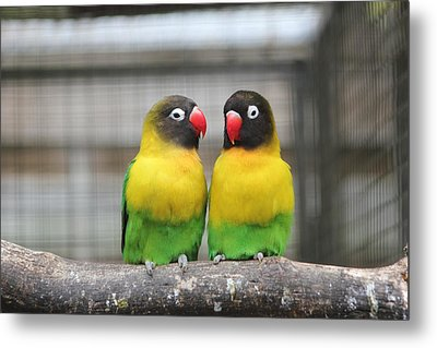 Love Birds Metal Print by Kerry Lapcevich