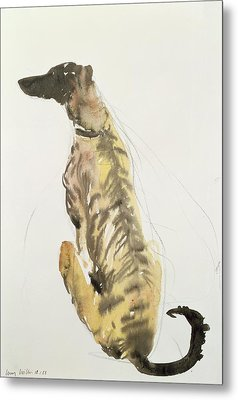 Lurcher Sitting Metal Print by Lucy Willis