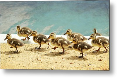 March Of The Ducklings Metal Print by Fraida Gutovich