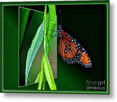 Monarch Butterfly 04 Metal Print by Thomas Woolworth