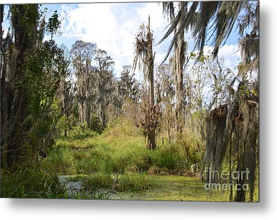 Natural Beauty Metal Print by Carol  Bradley