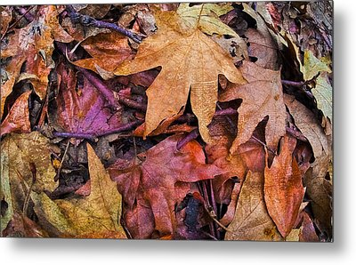 Nature  Metal Print by Andrew Raby
