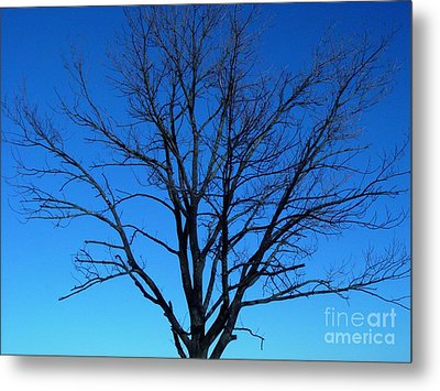 Nature Tree Metal Print by Boon Mee