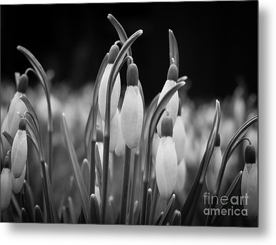 New Beginnings And Hope Metal Print by Inez Wijker Photography