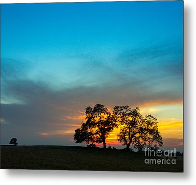 Oaks And Sunset 2 Metal Print by Terry Garvin
