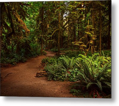 On The Trail To .... Metal Print by Randy Hall