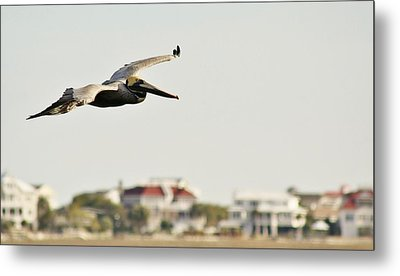 Pelican Flying Over Murrells Inlet Metal Print by Paulette Thomas