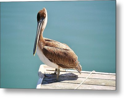 Pelican - Sitting On The Dock Of The Bay Metal Print by Paulette Thomas