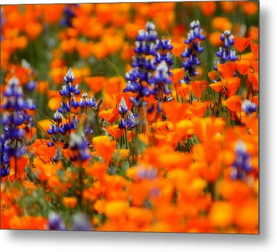 Poppies And Lupine Metal Print by Bill Keiran