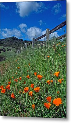 Poppies And The Fence Metal Print by Kathy Yates