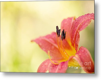 Popping Fresh Metal Print by Beve Brown-Clark Photography