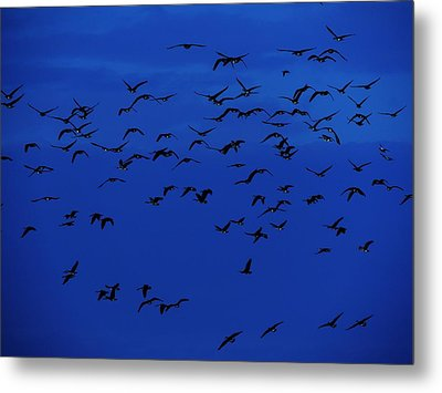 Red Eye Flight Metal Print by Todd Sherlock