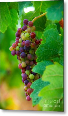 Red Grapes Metal Print by Hannes Cmarits