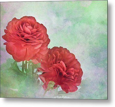 Red Ranunculus Metal Print by David and Carol Kelly
