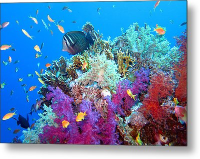 Red Sea Colours Metal Print by Laura Hiesinger