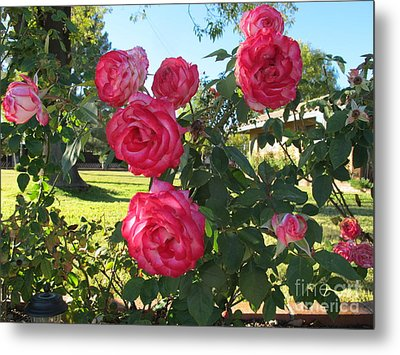 Roses For Your Valentine Metal Print by Michaline  Bak