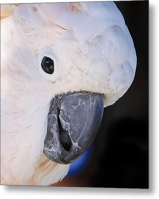 Salmon Crested Cockatoo Smiling Close Up Metal Print by  Andrea Lazar