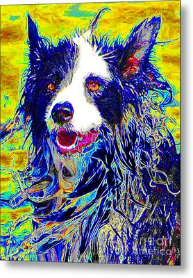 Sheep Dog 20130125v1 Metal Print by Wingsdomain Art and Photography
