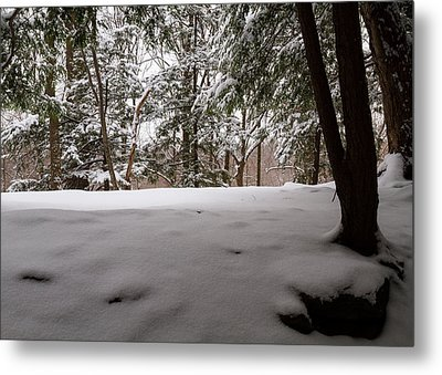 Snow In Shade  Metal Print by Tim Fitzwater