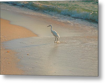 Snowy Egret In Surf II Metal Print by Steven Ainsworth