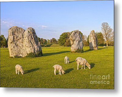 Standing Stones And Sheep Avebury Metal Print by Colin and Linda McKie
