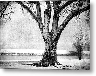 Stately Metal Print by Betty LaRue
