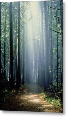 T. Bonderud Path Through Trees In Mist Metal Print by First Light