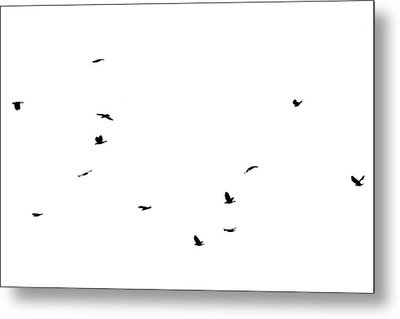The Birds Metal Print by Jessica Brown