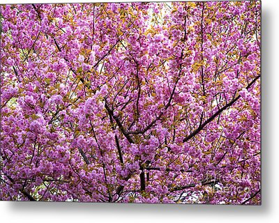 The Color Purple 2 Metal Print by Paul W Faust -  Impressions of Light
