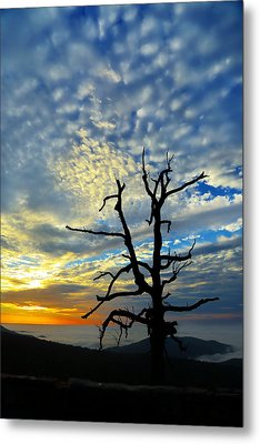 The Old Tree Metal Print by Metro DC Photography