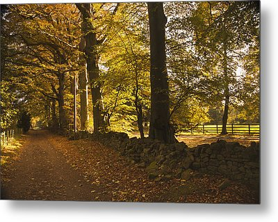 Tree Lined Road Covered With Fallen Metal Print by John Short