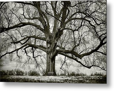 Tree With Bench Metal Print by Greg Ahrens
